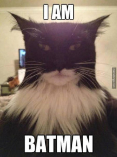 This Hilarious Cat Looks Exactly Like Batman