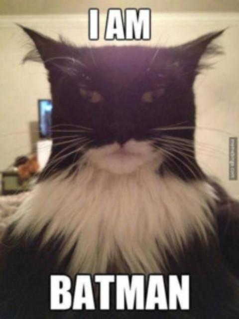 This Hilarious Cat Looks Exactly Like Batman